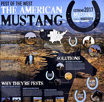 Poster about mustangs, contains various photos of wilderness, mustangs, and illustrations of horseshoes adn the united states