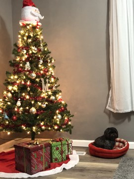 Decorated tree with gifts underneath and a dog sitting nearby